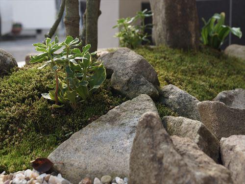石のある庭