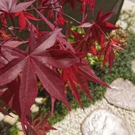 姫路市坪庭|和室前の小さな坪庭は家族の癒しの空間