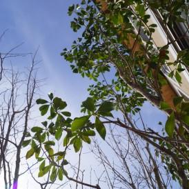 木漏れ日を楽しむ雑木林の庭 姫路市M様邸