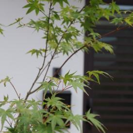 和風に似合う雑木の植栽工事 神崎郡K様邸