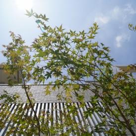 イロハモミジをプラスGに感じのいい植栽 姫路市H様邸